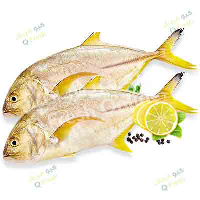 king fish price in qatar